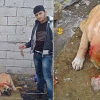 Waarom snijden 2 gasten in Turkije de oren van een puppy af en plaatsen de foto's op social media?