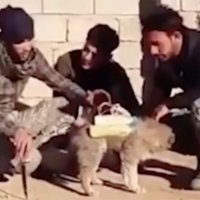 IRAQ: Islamic State (ISIS) using dogs as suicide bombers