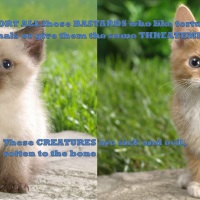 Denmark: Extreme cruelty to animals in Muslim ghetto: heads pulled off cats, kittens cut up and intestines pulled out