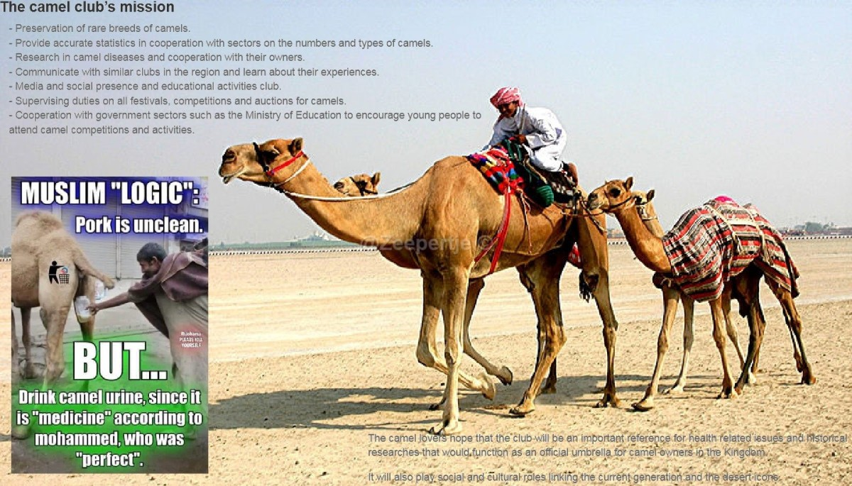 Saudi Arabia establishes the first official camel club