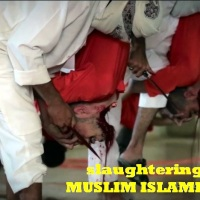 De ware islam zoals beschreven in de koran, hoe lang blijft u onwetend? Stop de verdere islamisering in Nederland!